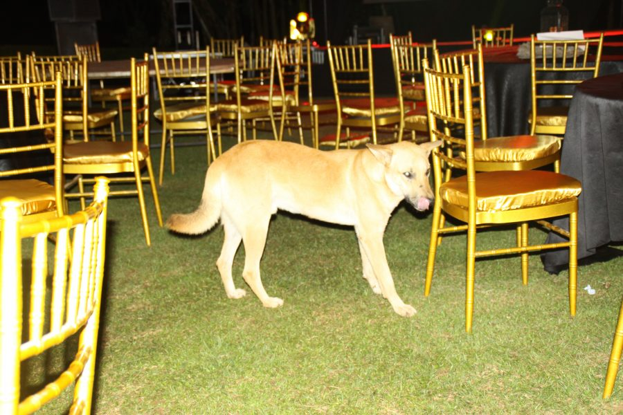 Rowdy Dog storms East African Golf Challenge beer party at Entebbe Golf Club.