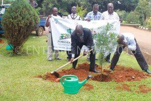 Mayor Kayanja planting a tree at Entebbe Municipal Council.
