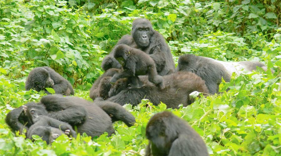 Uganda's Bwindi Impenetrable Forest has been ranked by CNN as the world's beautiful place